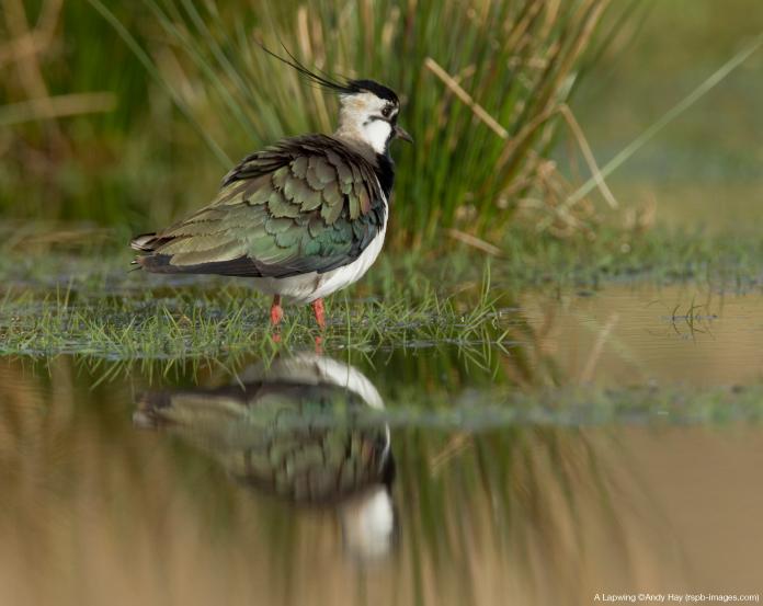 £150,000 boost for Thames Estuary habitats